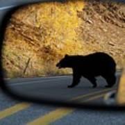 Bear Chance Art Print