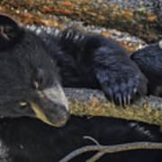 Bear Cub 2 Art Print