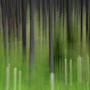 Bear Grass And Lodgepoles Art Print