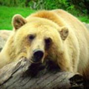 Bear On A Log Art Print