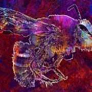 Bearded Bee Macro Insect Nature  Art Print