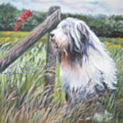 Bearded Collie With Cardinal Art Print