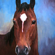 Beau  Quarter Horse Portrait Art Print