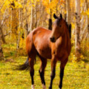 Beautiful Autumn Horse Art Print