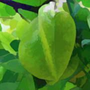 Beautiful Carambola Fruit Tree Art Print