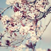 Beautiful Cherry Tree Blossom Art Print