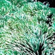 Beautiful Coral Reef 2 Art Print by Lanjee Chee