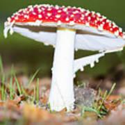 Beautiful Fungus Art Print