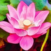 Beautiful Pink Lilies Art Print