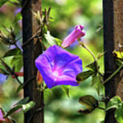 Beautiful Railroad Vine Flower II  Art Print