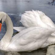 Beautiful Swans Art Print
