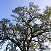Beautiful Tree Blue Sky Sunshine Art Print