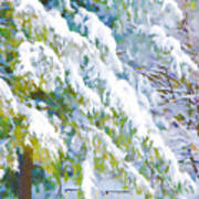 Beautiful Trees Covered With Snow In Winter Park Art Print