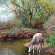 Beautiful White Horse And Enchanting Spring Art Print