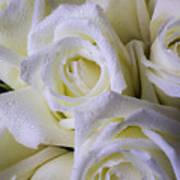 Beautiful White Roses Art Print