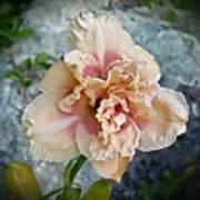 Beauty And The Boulder - Daylily Art Print