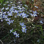 Beauty Blue Flowers Art Print