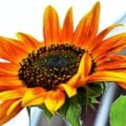 Beauty In A Sunflower Art Print