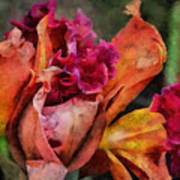 Beauty Of An Orchid Art Print