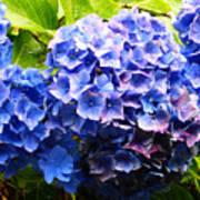 Beauty Of Blue. Art Print
