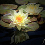 Beauty Of The Water Lily Art Print