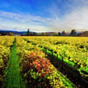 Beauty Over The Vineyard Art Print