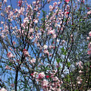 Beautiful Spring. Blooming Tree 2 Art Print