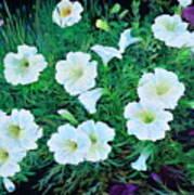 Beauyiful Petunias Art Print