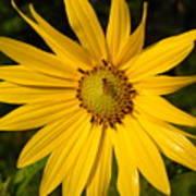 Bee And Yellow Flower Art Print