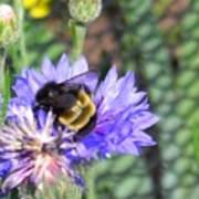 Bee Bee Art Print