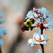 Bee Blossom Art Print