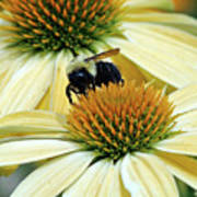 Bee Buzzer Art Print