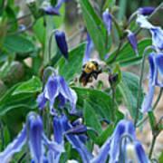 Bee Buzzing Through Blue Beauty Art Print