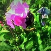 Bee Climbing Into Flower Art Print