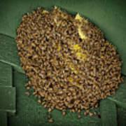 Bee Cluster Art Print