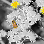Bee Colored Art Print