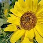 Bee-dazzled Art Print