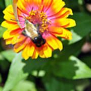 Bee Easy Art Print
