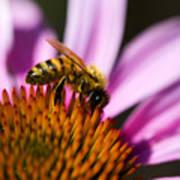 Bee Feasting Art Print