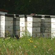 Bee Hives In A Farmer's Field Art Print