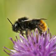 Bee I Art Print