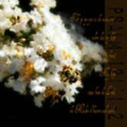Bee In Crape - Verse Art Print