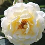 Bee My Rose Art Print