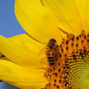Bee My Sunshine Art Print