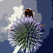Bee On An Allium Art Print