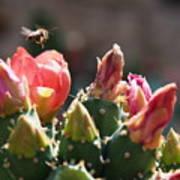 Bee On Cactus In Croatia Art Print