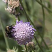 Bee On Flower 5. Art Print