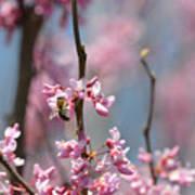 Bee On Pink Bloom Art Print