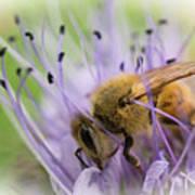 Bee On Purple Art Print