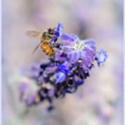Bee On Sage Art Print